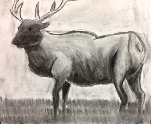 Jackie C., Charcoal, Inspired by Nature, Fall 2014